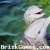 Dolphins Jigsaw Icon