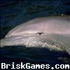 Dolphins Sli. Icon