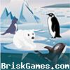 Iceland Puzzle Icon