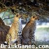 Leopard Jigsaw Icon