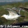 Marine Birds. Icon