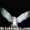 Owl Jigsaw Icon