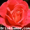 Red Rose Hidden Numbers Icon