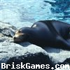 Sea Lion Jigsaw Icon