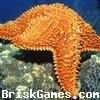 Sea Star Jigsaw Icon