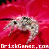 Spider Jigsaw Icon