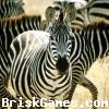Zebra Jigsaw Icon