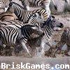 Zebra Slidin. Icon